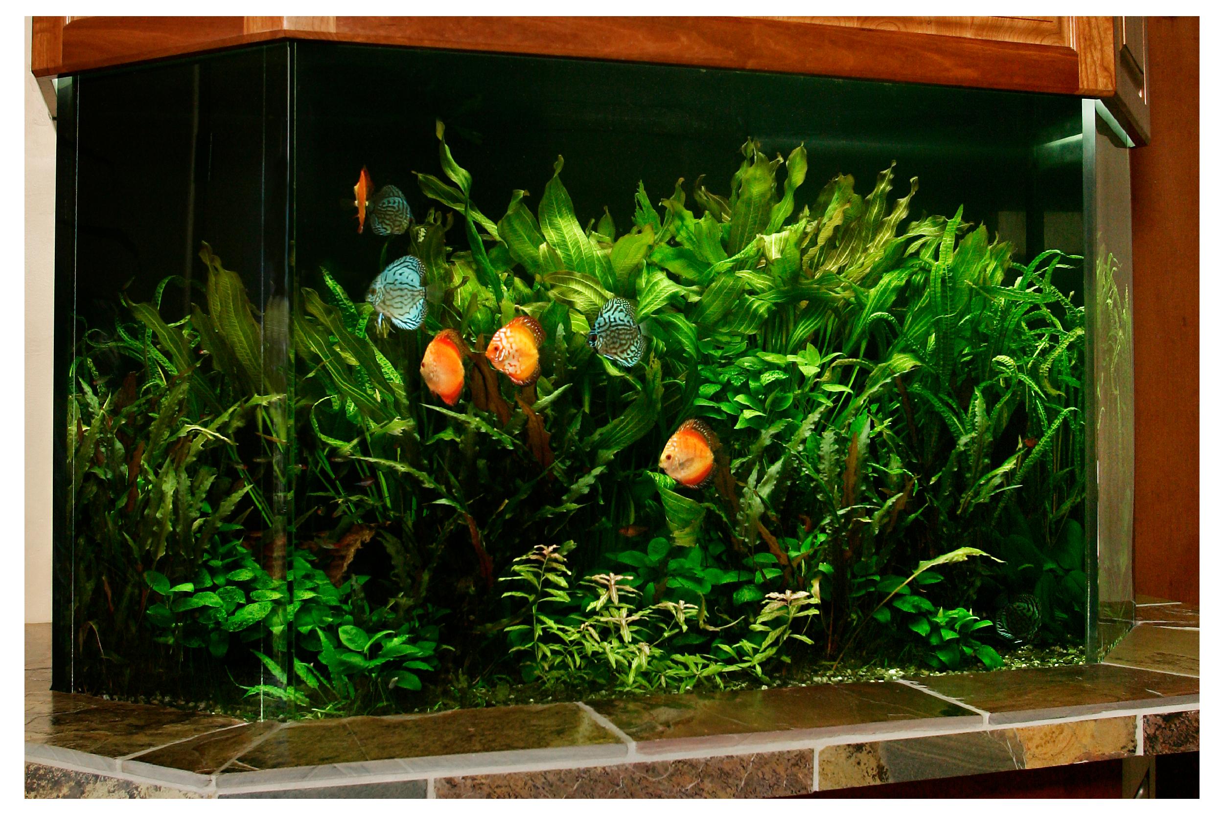Dennis Aquarium
