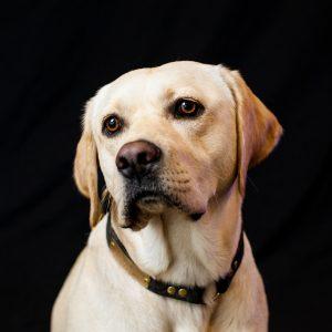 Headshot of Ozzie the Dog