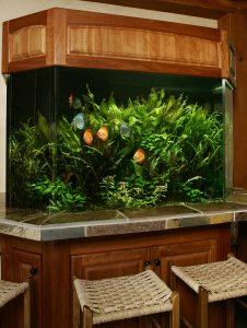 Dennis Residential Amazon Tank Aquarium