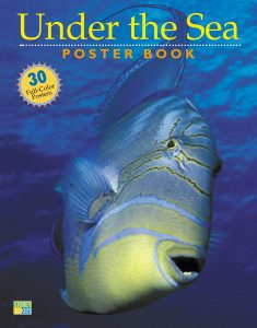 Cover of the book Under the Sea: poster book